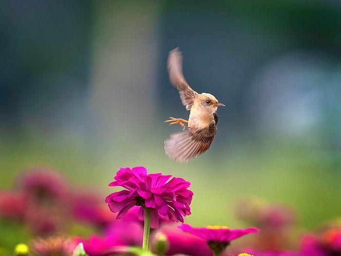 2020 OLYMPUS全國攝影大賽「生態保育組」金獎作品〈飛旋英姿〉康正為