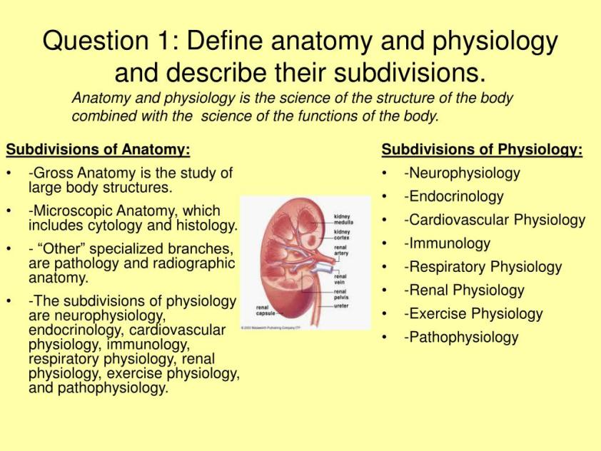 PPT - Human Anatomy and Physiology PowerPoint PowerPoint ...