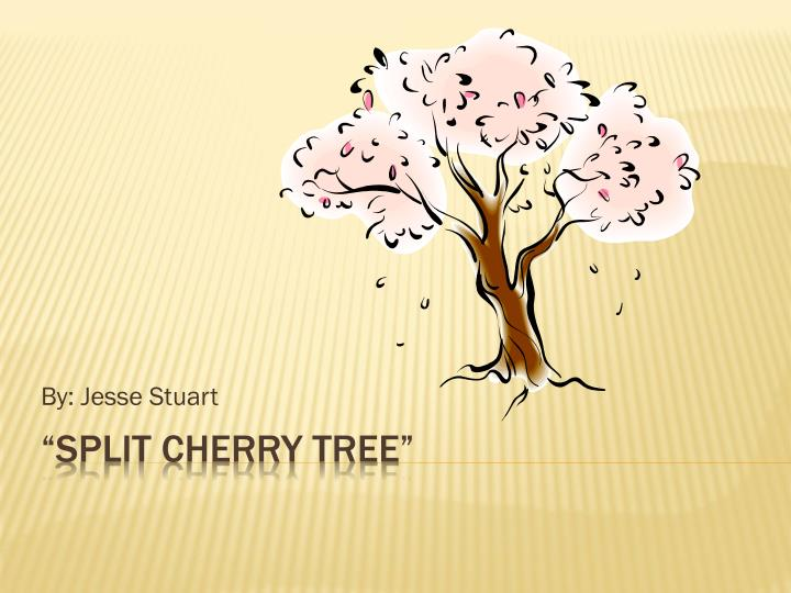Literary analysis on split cherry tree sap and brewing and resume