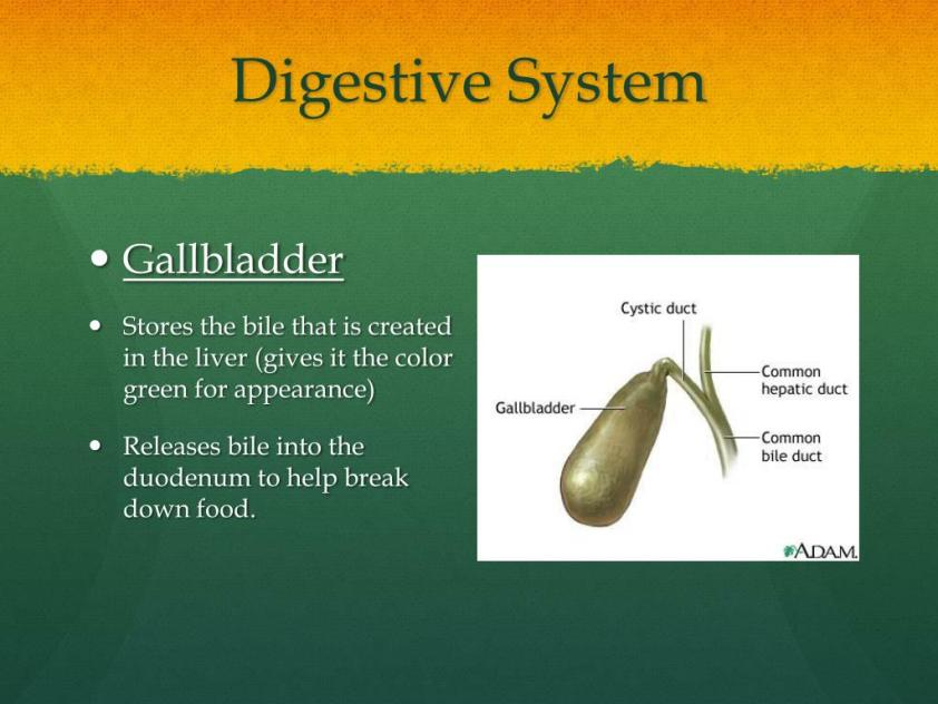 PPT - Human Body Systems Project Part 1 PowerPoint ...