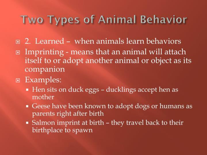 Animal Imprinting Examples