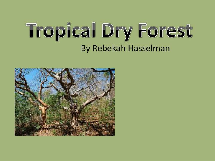 Tropical dry forests are among the most threatened biomes in the. Ppt Tropical Dry Forest Powerpoint Presentation Free Download Id 2048004