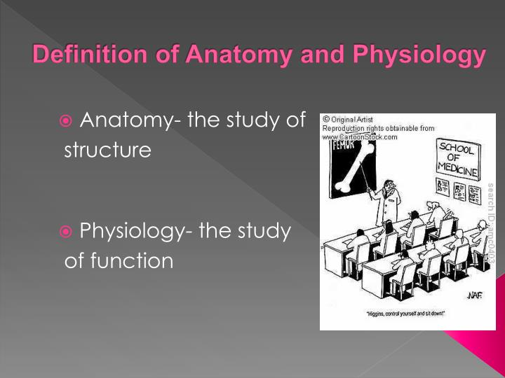 PPT - Anatomy and Physiology of the Skeletal System ...