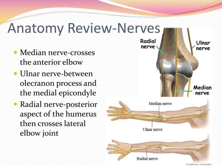 PPT - Elbow and Forearm Evaluation PowerPoint Presentation ...