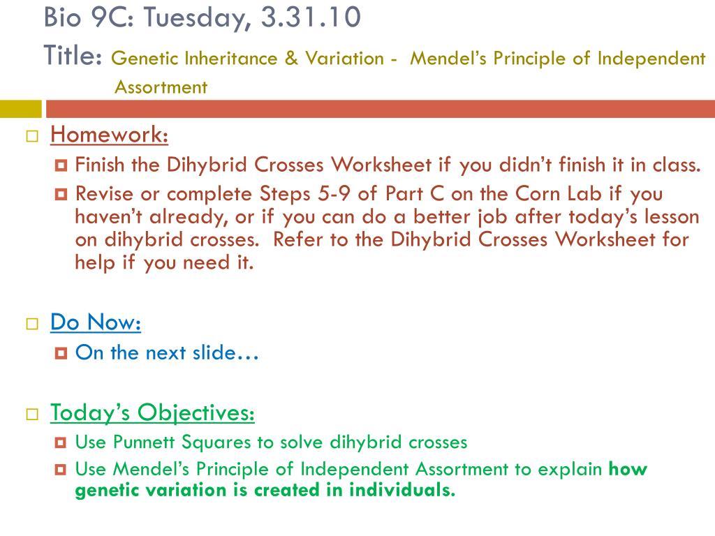 Bestseller Chapter 10 Dihybrid Cross Worksheet