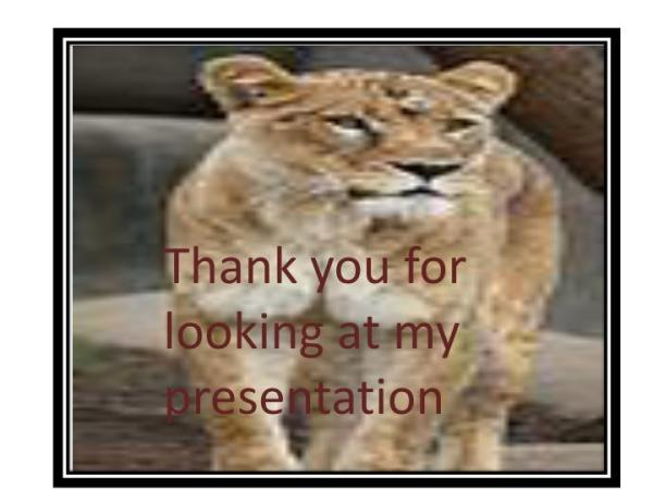 PPT Cheetahs and lions PowerPoint Presentation ID2353062