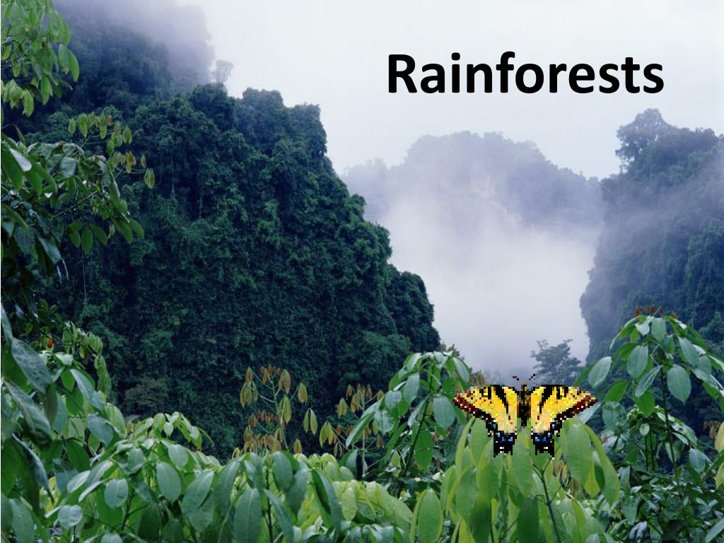 However, there are many other examples of mutualism in this type of ecosystem. Ppt Rainforests Powerpoint Presentation Free Download Id 2429150