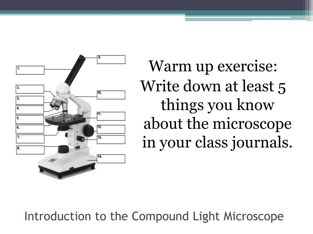 Microscope Fill In The Blank Exercise