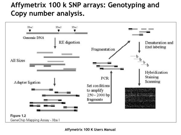 PPT - A strategy for DNA sequence analysis of genome ...
