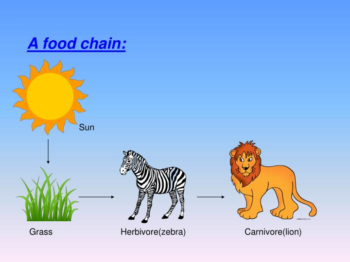 Cheetah Food Chain Information
