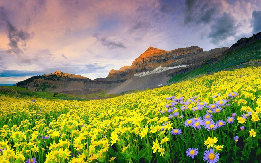 Detailed itinerary for Valley of Flowers trek