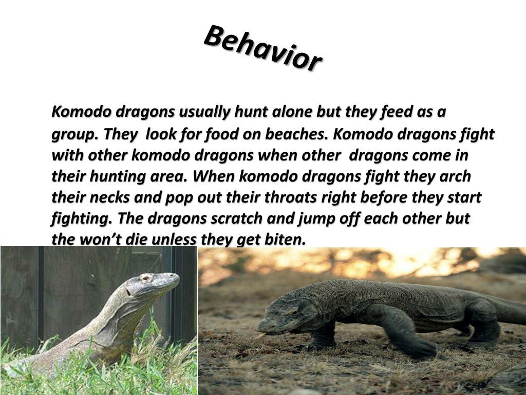 Komodo Dragon Behavior Facts