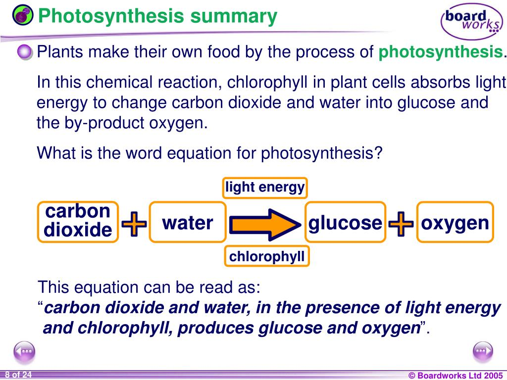 What Is The Word Equation For Photosynthesis Ks3