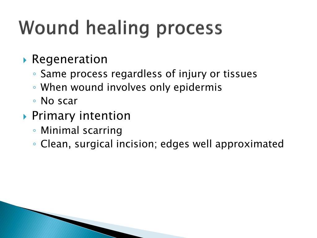 Epithelial Granulation Tissue Vs Wound Healing