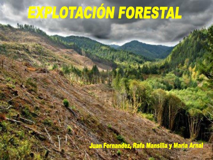 Ppt Explotaci 211 N Forestal Powerpoint Presentation Id