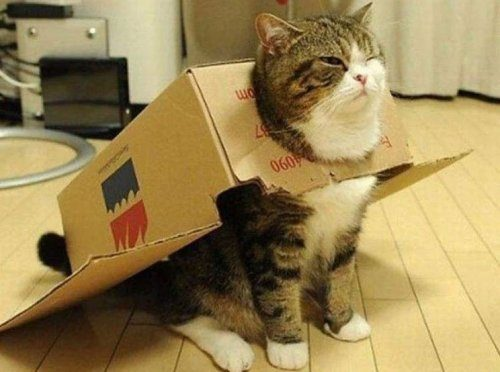 Ćelav prilično maca