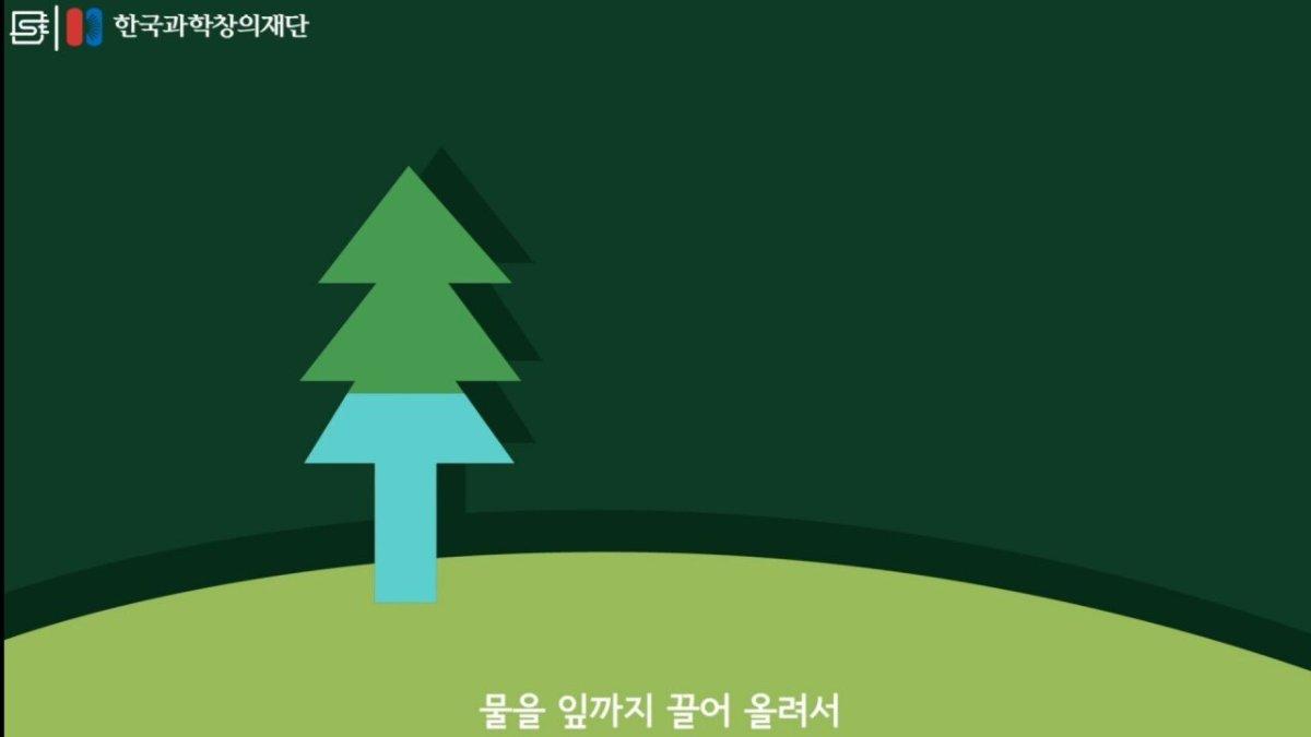 20200808_174114.jpg 초딩도 이해하는 태양광 때문에 잘린 나무가 하는일.jpg