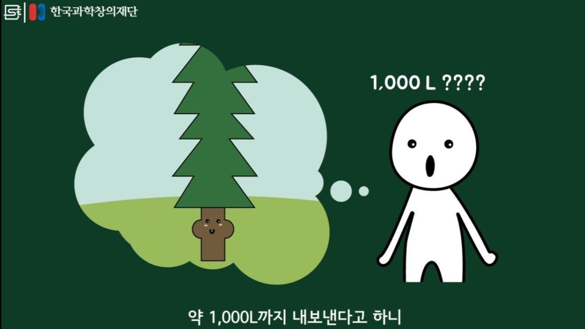 20200808_174146.jpg 초딩도 이해하는 태양광 때문에 잘린 나무가 하는일.jpg