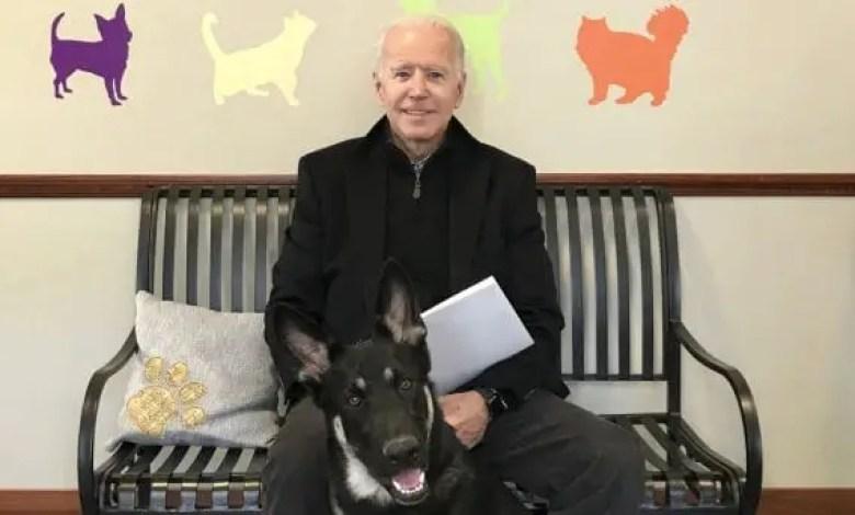 Etats-Unis: Le président élu Joe Biden se fracture le pied en jouant avec son chien - Joe Biden