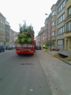 A fresh load of trees to align this newly paved street.