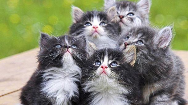 Как владелец 10 котят пытался их сфотографировать: смешное ...
