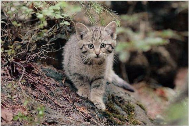 15 тварин України, яких ми можемо більше не зустріти у ...