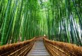 ป่าไผ่อาราชิยาม่า