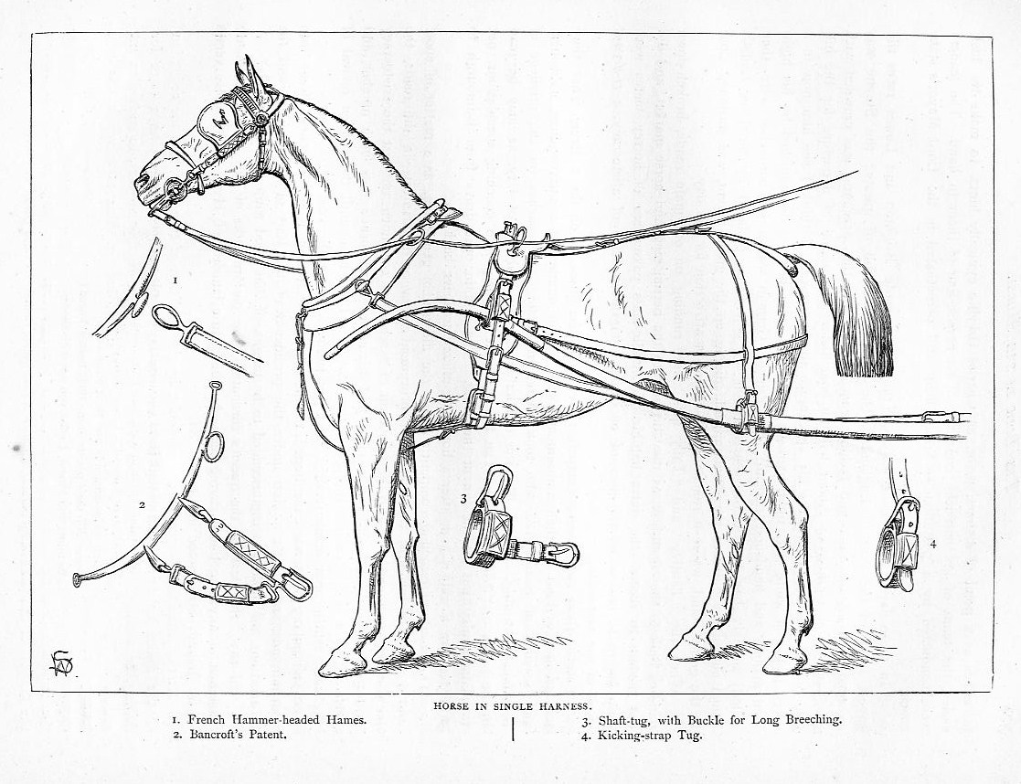 Horse In Single Harness Bancroft Patent Buckle Strap