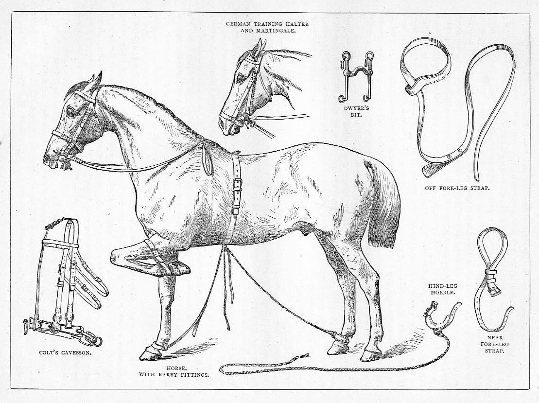 Horse Breaking Appliances Training Halter Hobble Bit