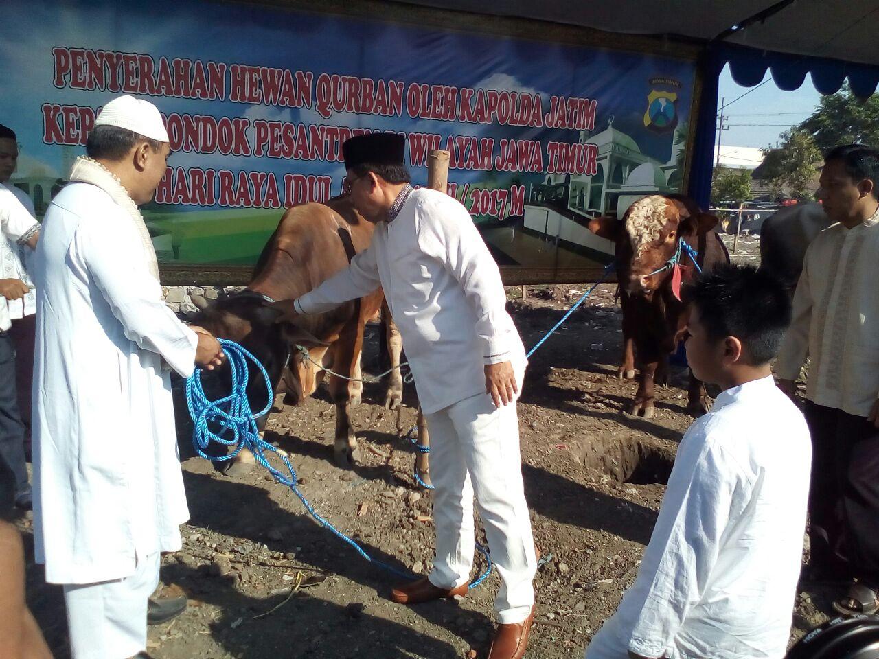 <h5>Idul Adha 1438 H</h5> <h3>Kapolda Bagikan 293 Sapi dan 896 Kambing ke Pesantren se-Jawa Timur</h3>