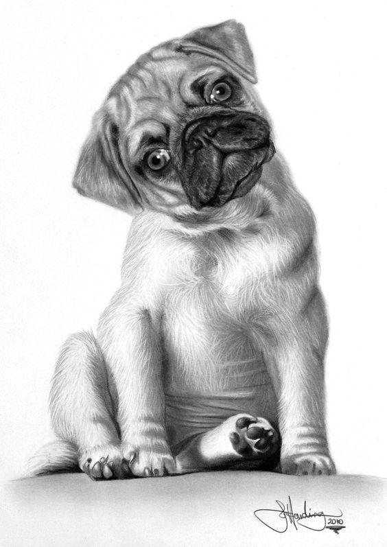 10 Lindos Dibujos A Lapiz De Perros Imagenes
