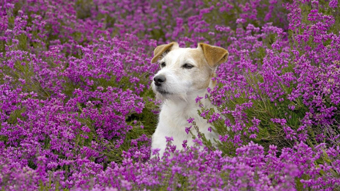 Pin gato y flores fondos de pantalla fotos gratis on pinterest for Fondos de pantalla de perritos