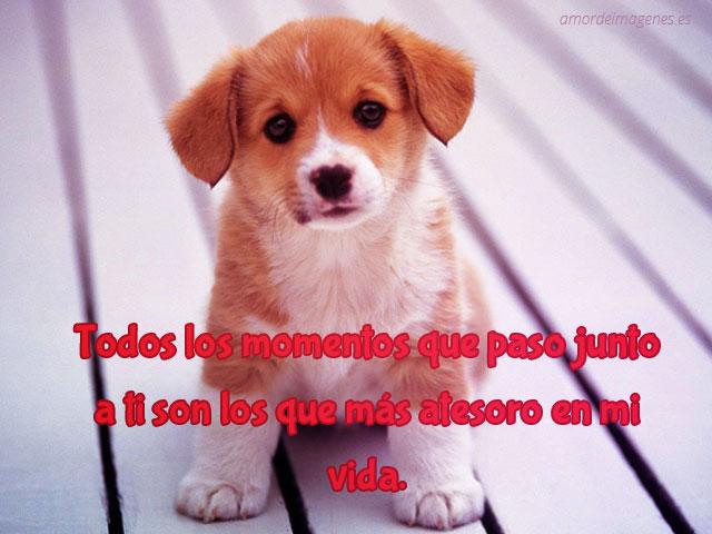 Fotos tiernas de perros con frases de amor