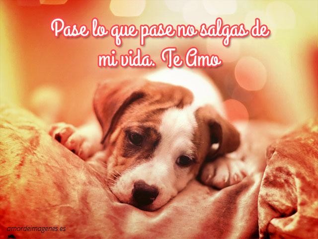 Imagenes De Perros Con Frases De Amor Para Dedicar