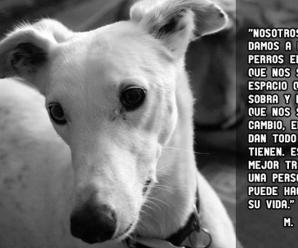 Imagenes Lindas De Perros Con Reflexiones Para Celular