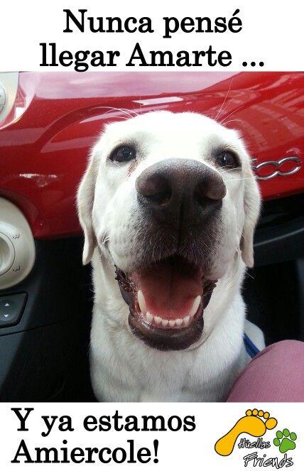 Fotos de perros graciosos - Todo Razas De Perros
