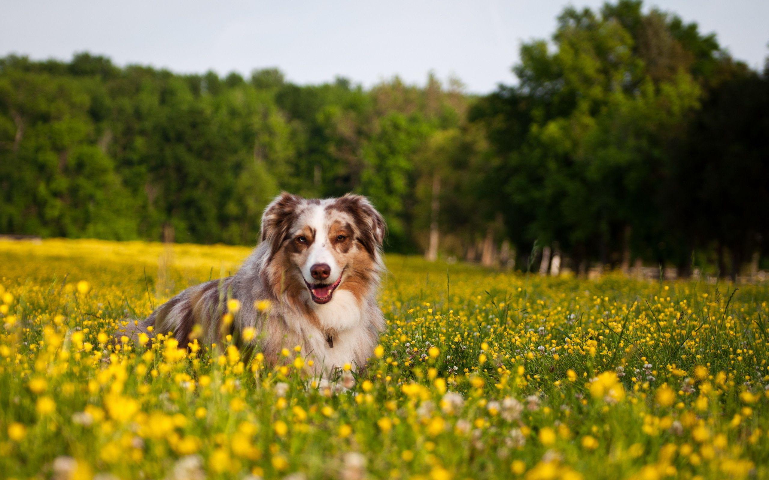 Imagenes de perros en medio de un campo de flores para for Fondos de pantalla de perritos