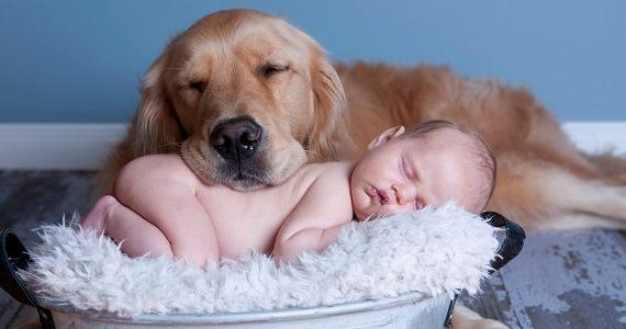 Imagenes Ttiernas De Perros Durmiendo Con Bebes