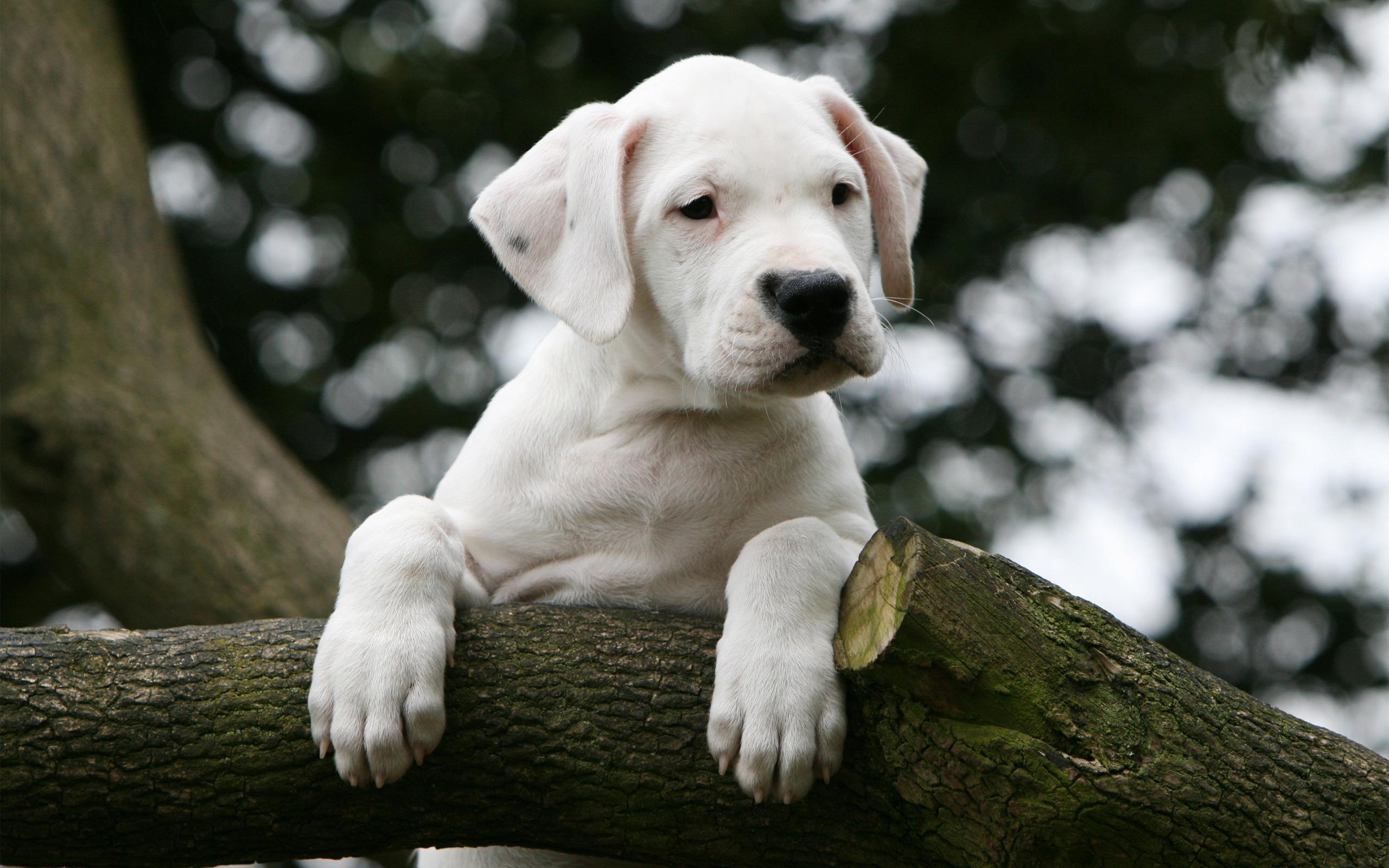 Fondos de pantalla de cachorros tiernos imagenes de perros for Fondos de pantalla de perritos