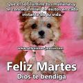 Imagen de Perrito Feliz Martes Dios Te Bendiga