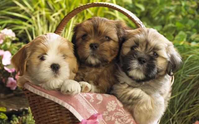 Imagenes Para Fondos De Pantalla De Cachorros Tiernos