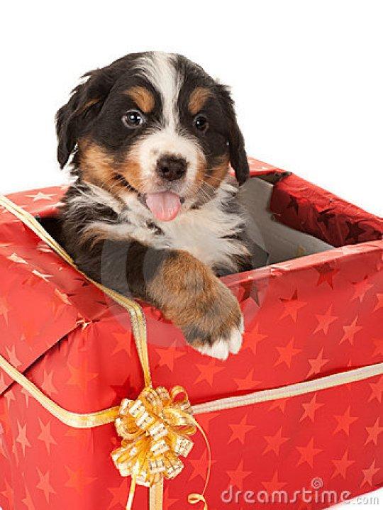 imagenes-de-perritos-de-regalo-de-navidad