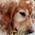 Imagenes De Perros Feliz Navidad Para Un Amor Que Esta Lejos