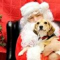 Imagenes De Perros Con Papá Noel Para Descargar