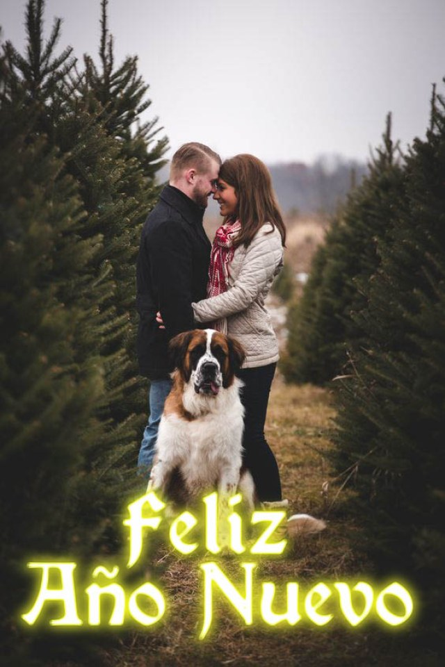 Imagenes de novios con perros y frases feliz año nuevo
