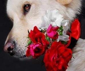 Imagen de un Perrito Con Flores Para Regalar A Mi Novia