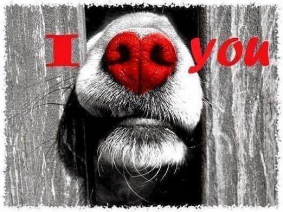 Imagenes De Perros Para Regalar En San Valentín Por WhatsApp