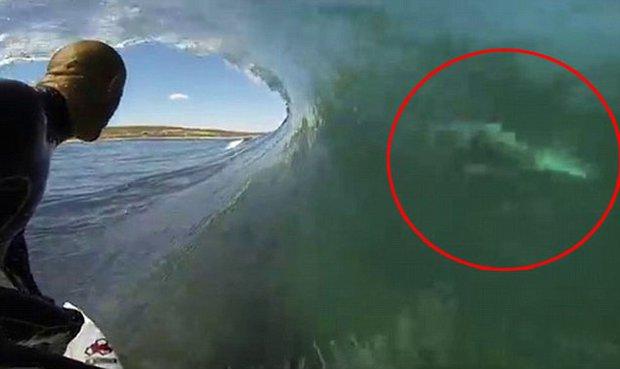 Surfista Y Tiburn Separados Slo Por El Fino Muro De