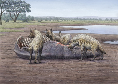 Reconstrucción de un grupo de hienas gigantes devorando un elefante en Orce.