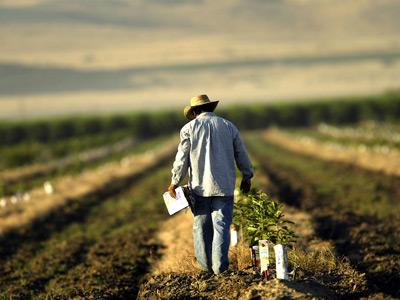 El uso de fertilizantes en la agricultura es uno de los procesos clave en la contaminación por formas reactivas del nitrógeno. GETTY